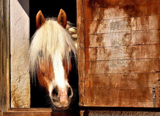 Vlas paardenstal