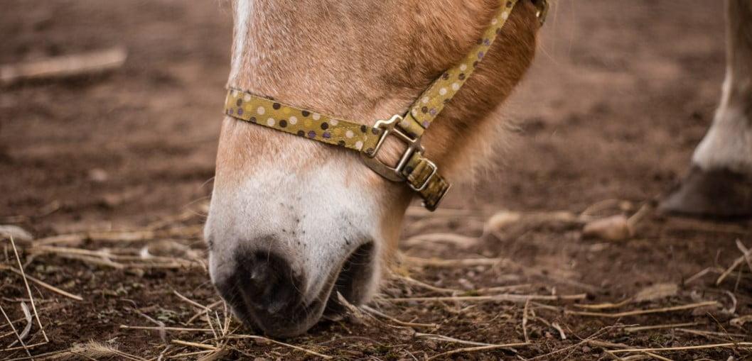 Paard eet stal leeg 1